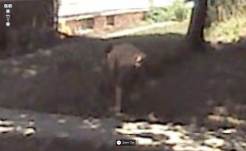 Yeah, that's my ass on Google Street view.