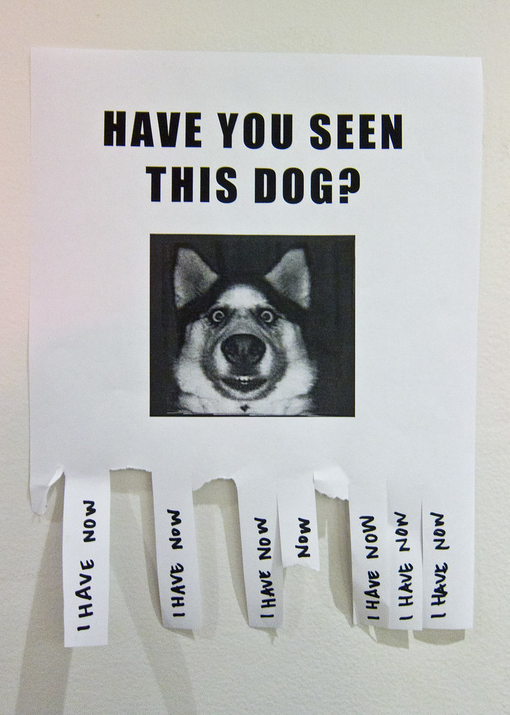 Have You Seen This Dog? - make a missing poster