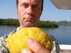 The way a real organic lemon should look