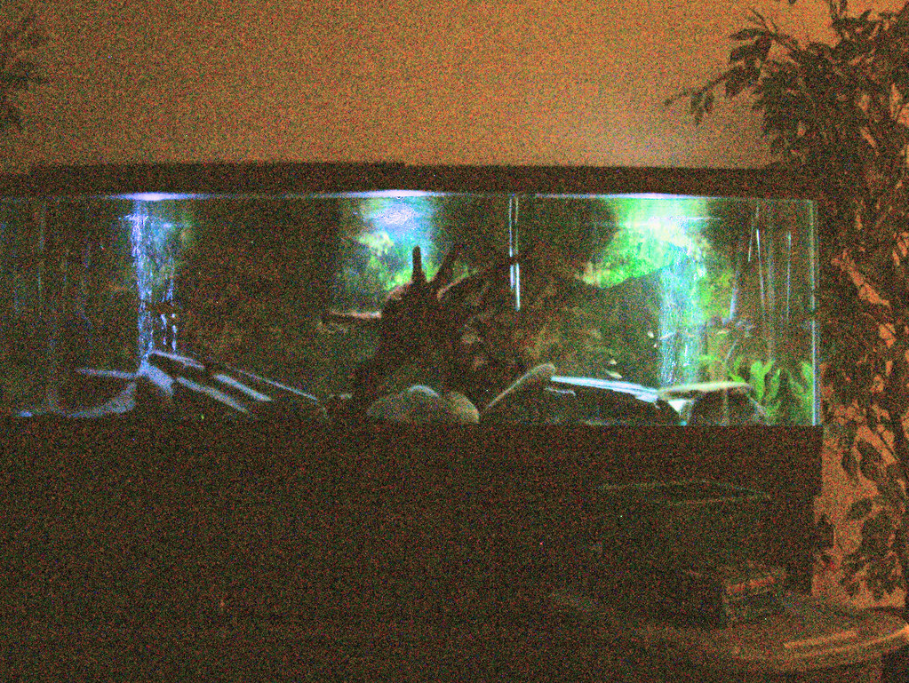 Aquarium Bottom Light Tanks For The Memories 135 Gallon Fresh Water Preditor
