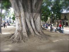 bigtree.JPG