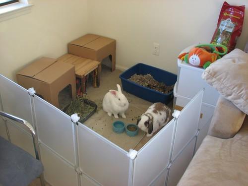 bunny prison