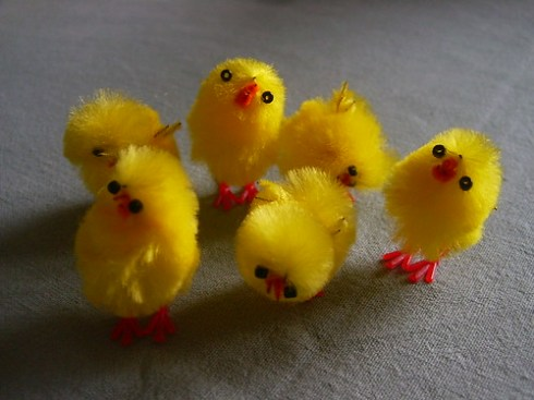 Look, it's chicks!