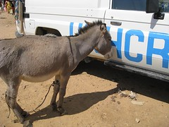 Donkey and UNHCR 2