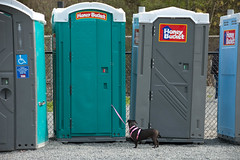 Portapotty walking its dog