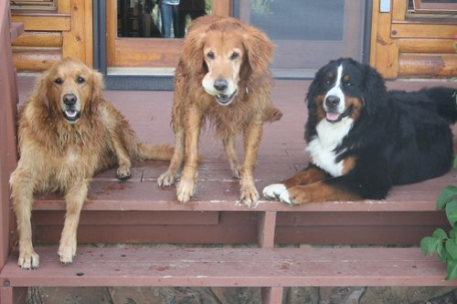Jackson, Murphy, Sophie