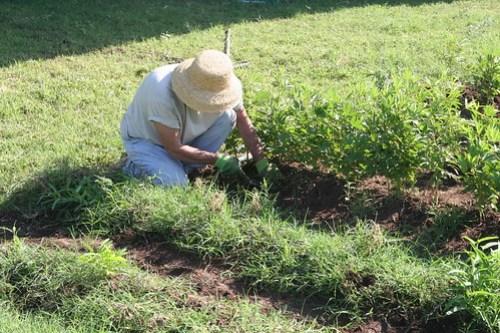 Weeding and harvesting