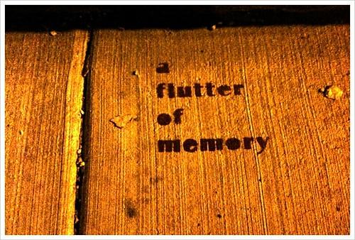 A flutter of memories