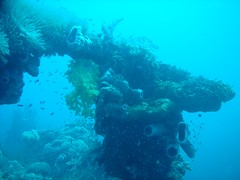A deck gun hidden by marine life