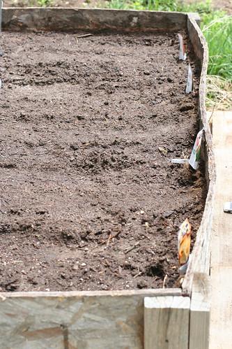 Planting Dana's garden