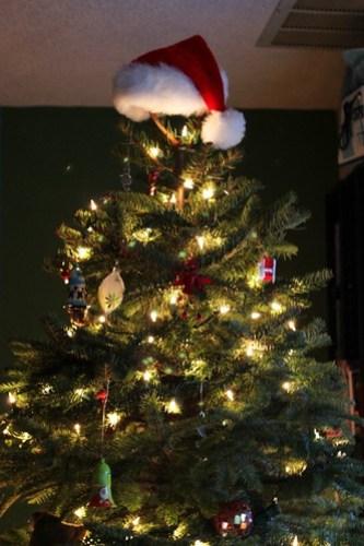 a noble fir