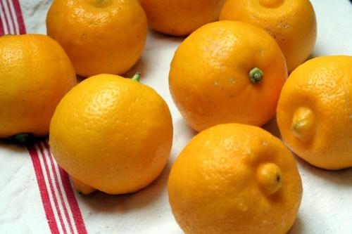 bergamots