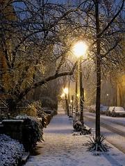 Swann Street Lights