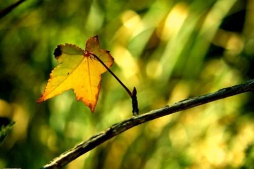 Last Leaf HBW