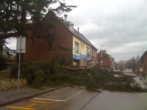 Takje van een boompje afgewaaid... #Storm