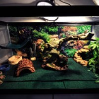 20 gallon aquarium bearded dragon - My Bearded Dragon Tank Setup (20 Gal Tank)   YouTube