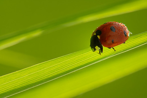 """little red in green • <a style=""""font-size:0.8em;"""" href=""""http://www.flickr.com/photos/22289452@N07/9329352512/"""" target=""""_blank"""">View on Flickr</a>"""