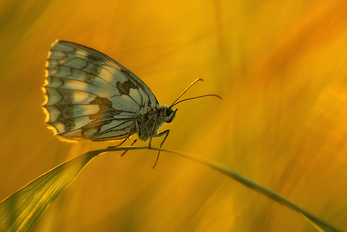"""Butterfly enjoying the last sunlight • <a style=""""font-size:0.8em;"""" href=""""http://www.flickr.com/photos/22289452@N07/9269286583/"""" target=""""_blank"""">View on Flickr</a>"""