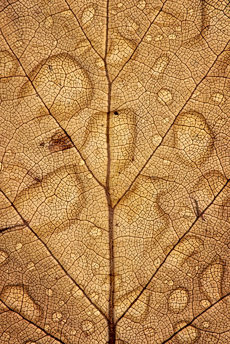 """leaf after rain • <a style=""""font-size:0.8em;"""" href=""""http://www.flickr.com/photos/22289452@N07/14468723360/"""" target=""""_blank"""">View on Flickr</a>"""
