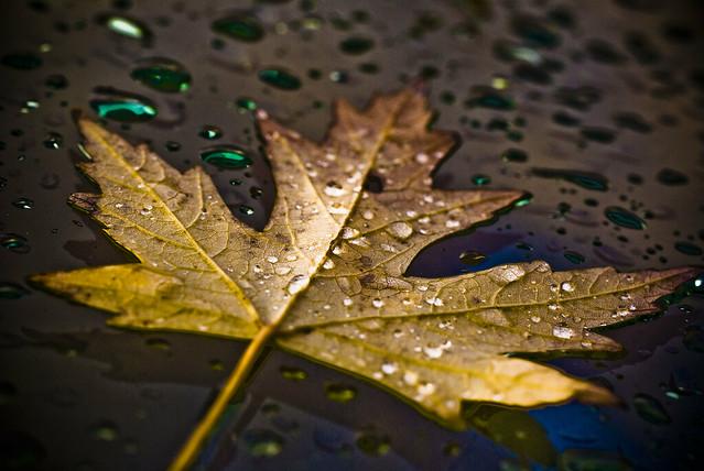 Wallpaper Falling Down Autumn Rain A Gallery On Flickr