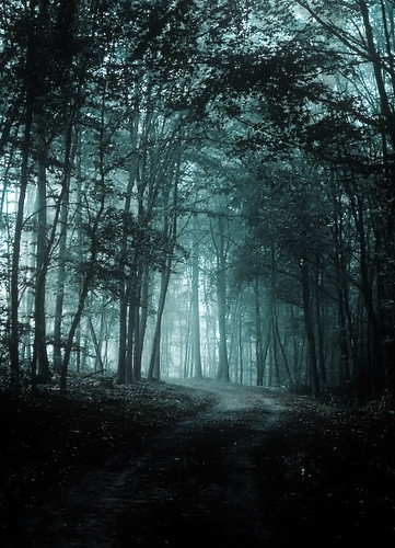 Fall Forest Wallpaper Cold Forest Flickr Photo Sharing