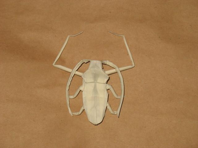 Acrocinus Longimanus