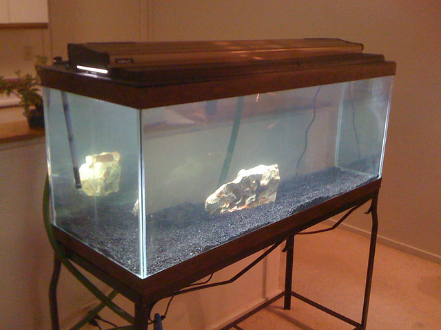 Fish tank movie 70 gallon new 70 gallon aquarium for Fish tank set