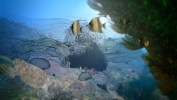 Gauthier_Underwater_Colored_withMB_WireframePassStill__00080