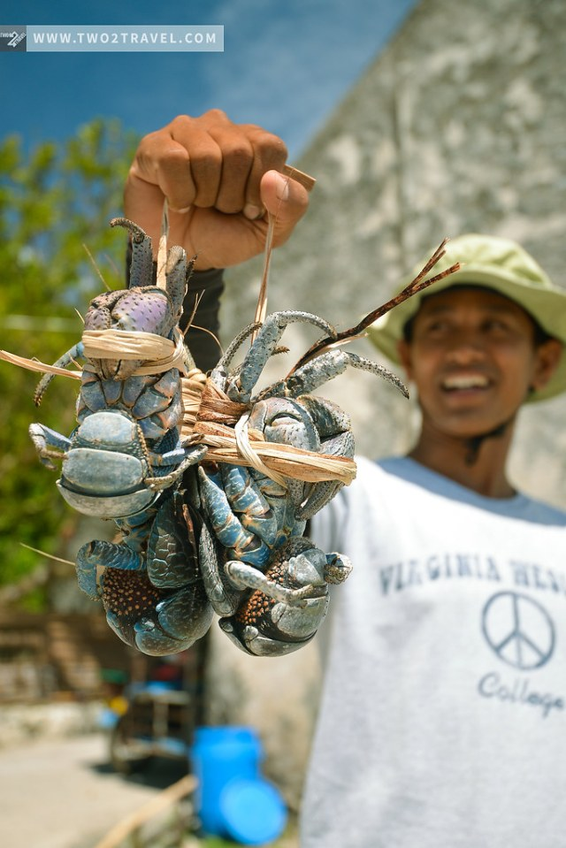 Coconut crabs in Sabtang, Batanes - Two2Travel.com