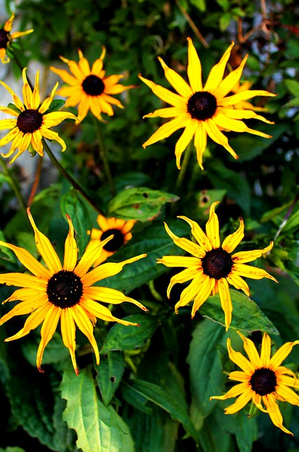 Wallpaper Primavera Hd Peak District Flowers Dailyshoot Flickr Photo Sharing