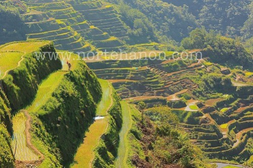 rice terraces1