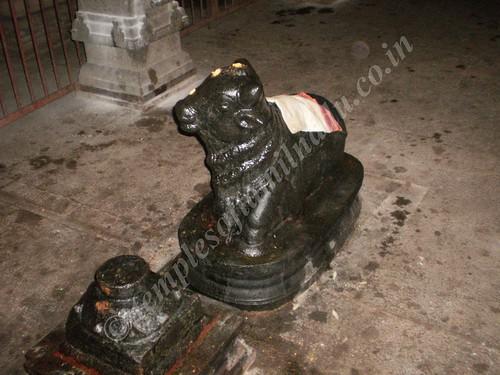 Nandi in the Sivan Sannadhi, Thiruvisanallur