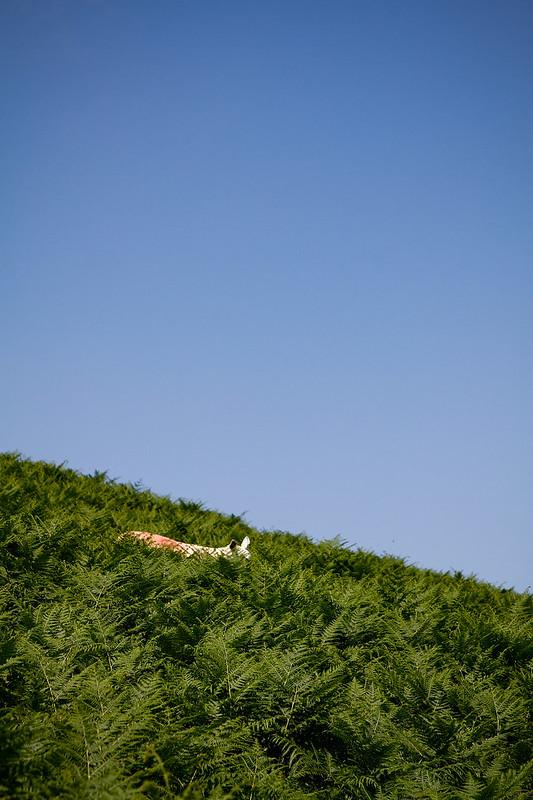 Tuukka13 - PHOTO DIARY - Hiking around Luggala and Lough Tay Wicklow, Ireland, 06.2013 -6