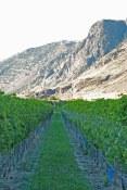 Orofino photo of vineyard and mountain