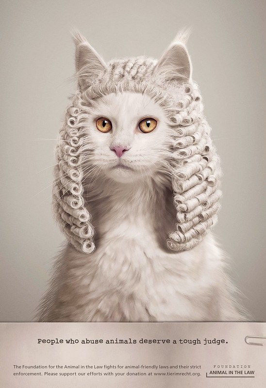 Foundation Animal In The Law - Cat Judge