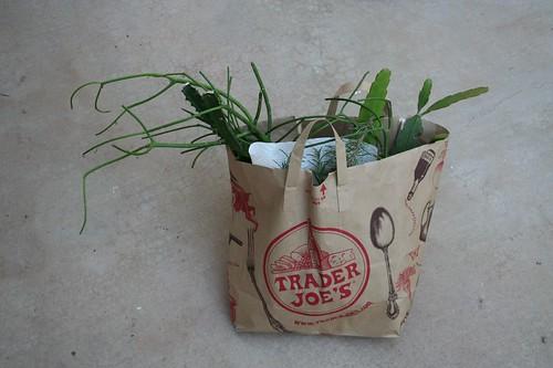 Bag of cuttings