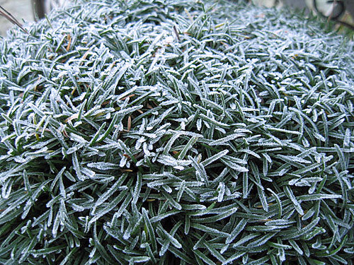 Frost on Thrift