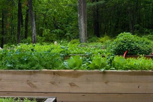 Humble Garden 2009: green beds