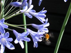 flowers and the bees