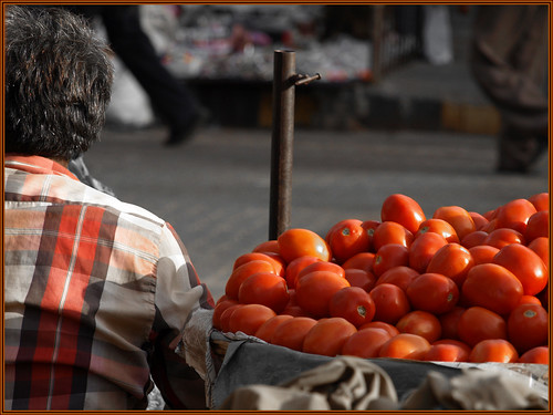 The Tomato Seller