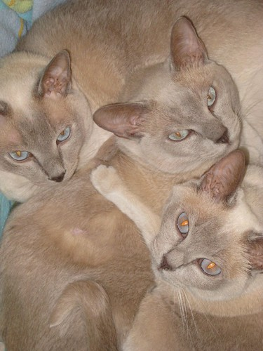 Clockwise from left: Obi, Cali, and Megs