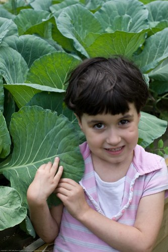 Humble Garden: KD and the cabbages