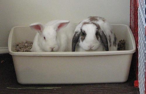 two buns, one litter box