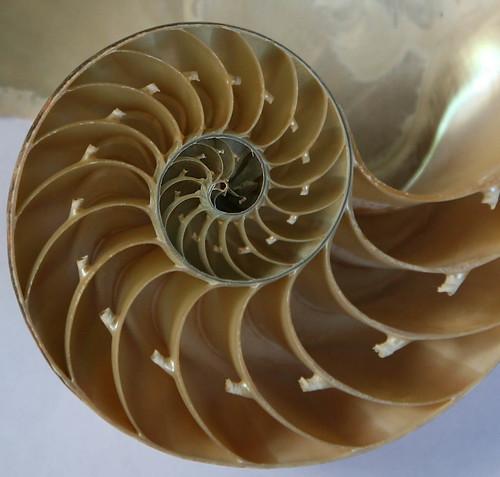 ammonite suture patterns Nervous System blog