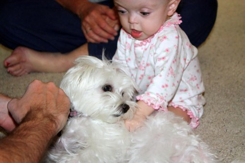 petting her puppy