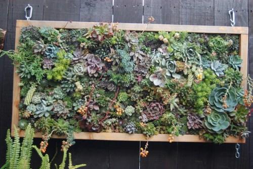Big, bad A succulent panel