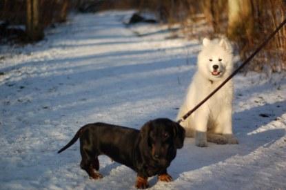 Elsa o Zack