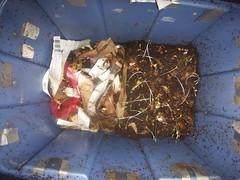 worm bin divided