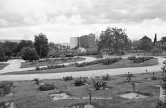 Parc de Cervantes-5