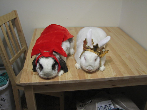 buns not happy being in costume